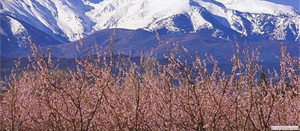 Canigou-printemps[1]